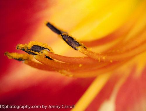 Spring time macro fun | art photography