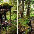 Walkway in the woods